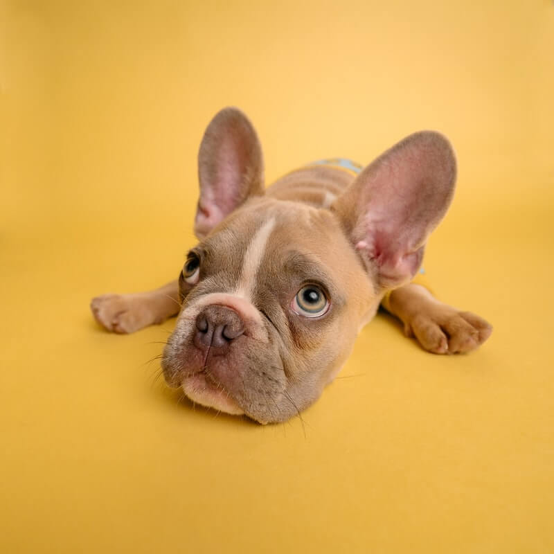What to do if the dog is not in the mood
