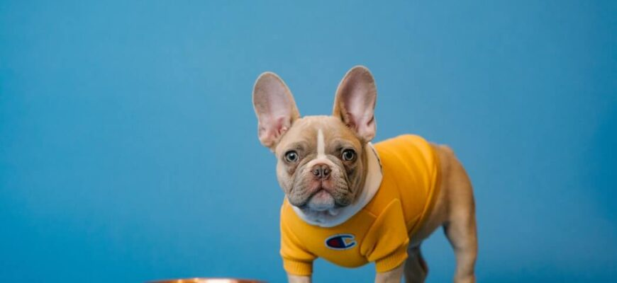 How do you choose the right dog food?