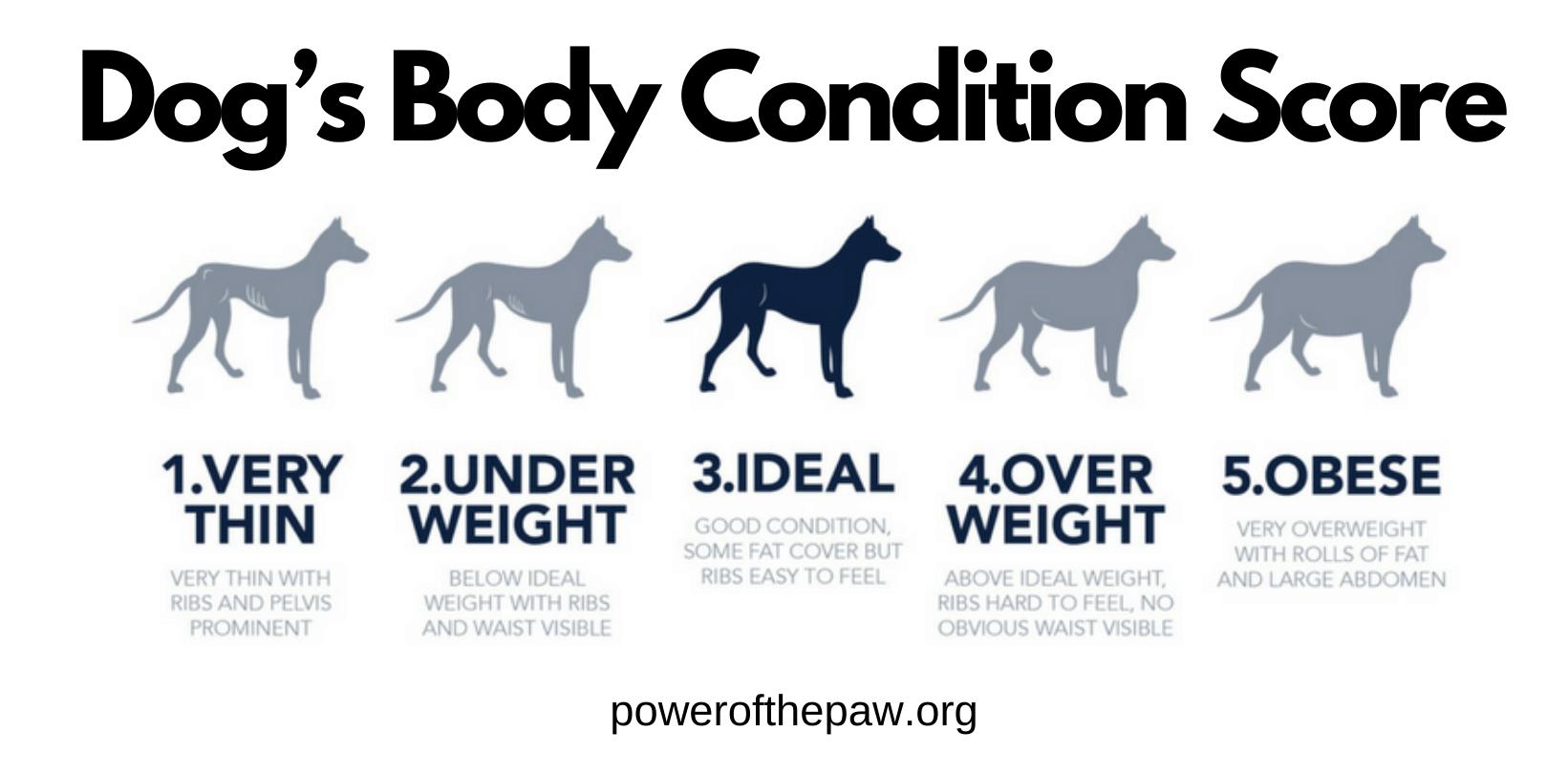 dog's body condition score