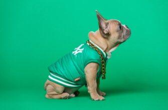 Puppy-Essentials-Shopping